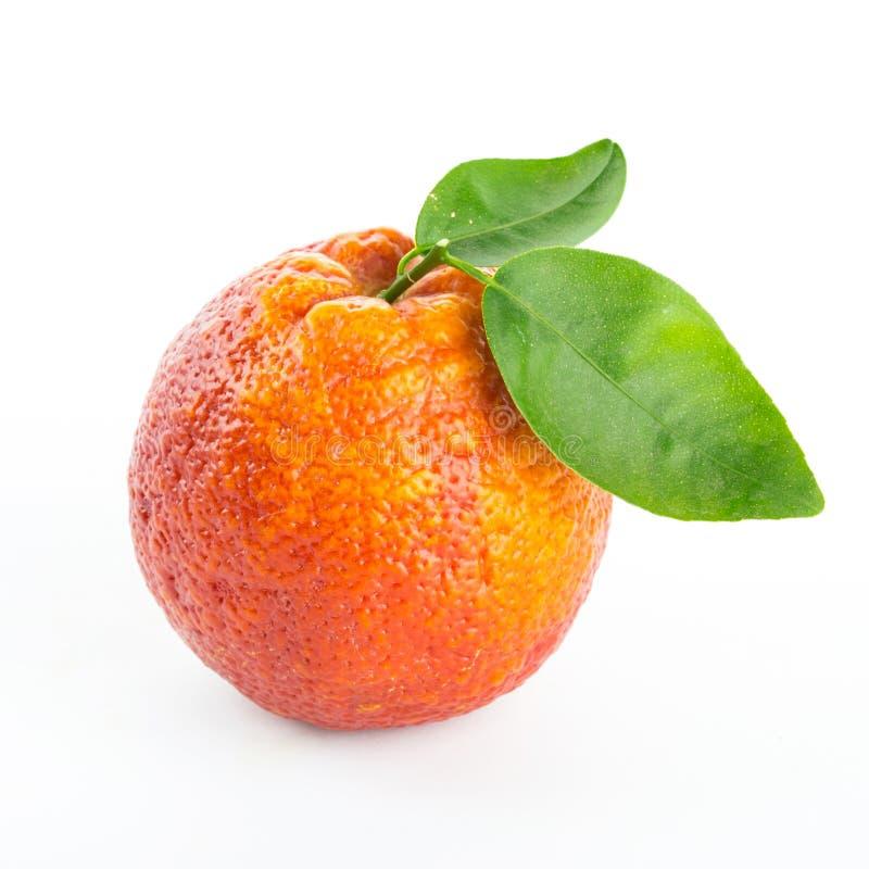 Κόκκινο πορτοκάλι αίματος με τα πράσινα φύλλα στοκ φωτογραφία