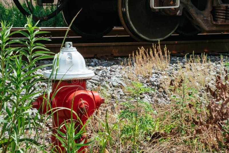 Κόκκινο στόμιο υδροληψίας πυρκαγιάς στην επίγεια κάλυψη φλοιών, μπροστινή ενός θάμνου που αρχίζει να παρουσιάζει χρώματα πτώσης στοκ εικόνες