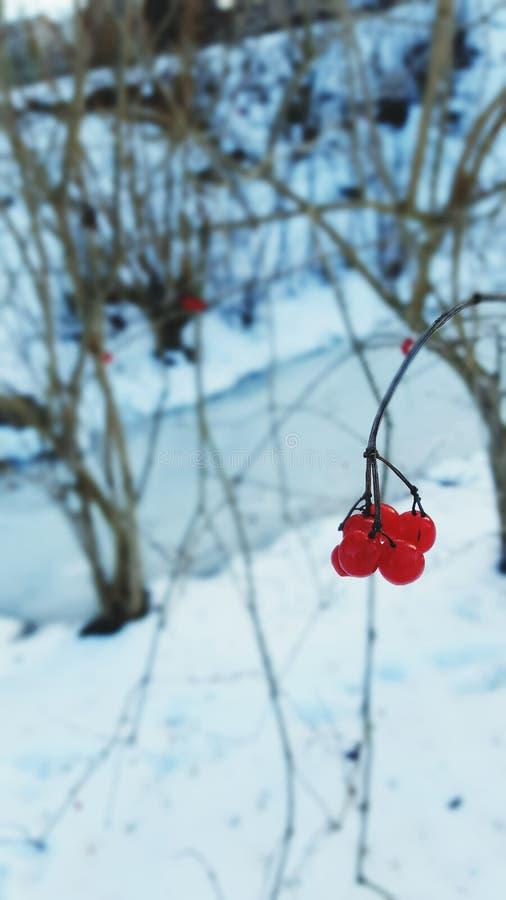 Κόκκινο το χειμώνα στοκ εικόνα