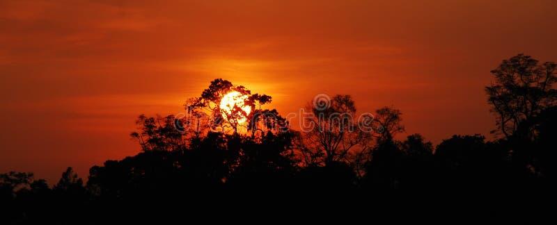 Κόκκινο τροπικό δάσος του Αμαζονίου ουρανού στοκ εικόνες