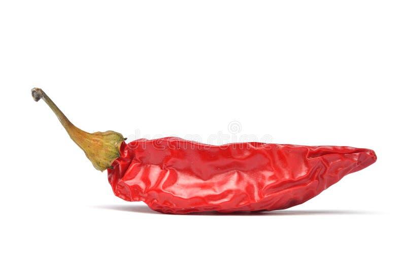 κόκκινο τσίλι στοκ φωτογραφία