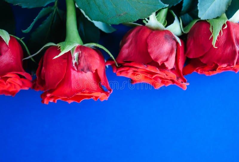 Κόκκινο υπόβαθρο τριαντάφυλλων στοκ φωτογραφία
