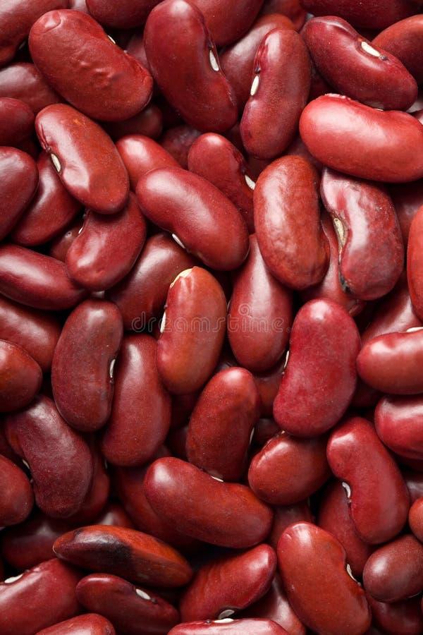 κόκκινο φασολιών φασολιών ανασκόπησης στοκ εικόνα με δικαίωμα ελεύθερης χρήσης