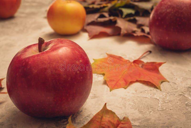 Κόκκινο ώριμο μήλο σε ένα γκρίζο υπόβαθρο με ένα φύλλο σφενδάμου στοκ εικόνα