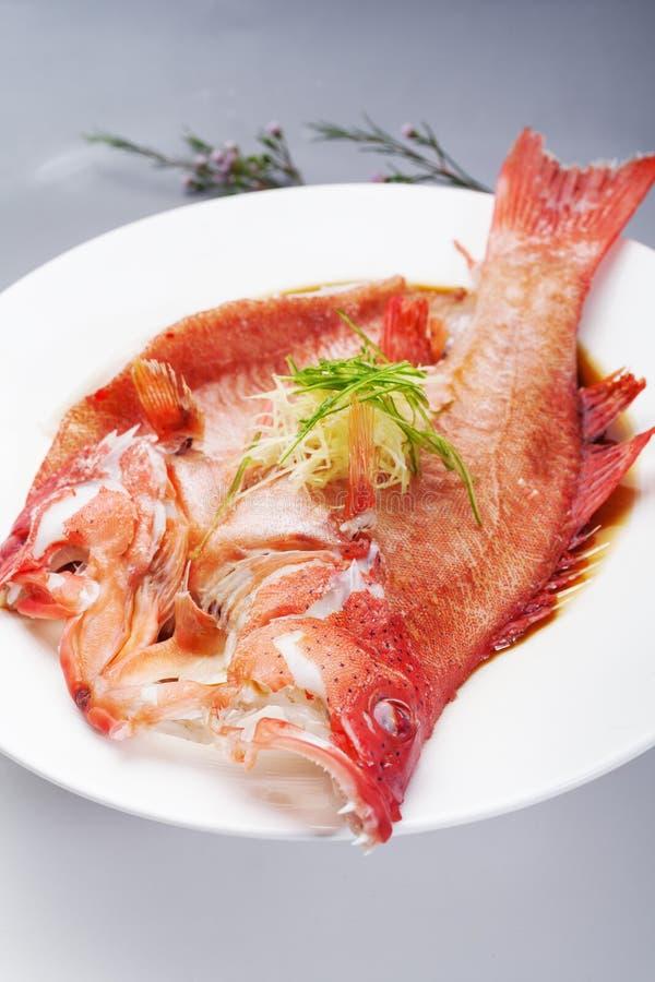 Κόκκινο grouper στοκ εικόνες