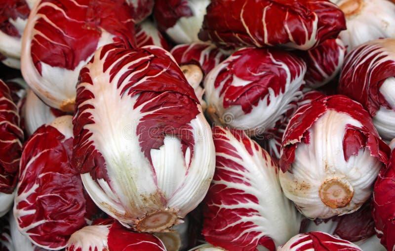 Κόκκινο radicchio του Treviso για την πώληση στοκ φωτογραφίες με δικαίωμα ελεύθερης χρήσης