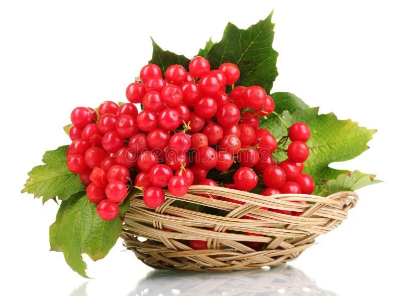 κόκκινο viburnum μούρων στοκ φωτογραφία με δικαίωμα ελεύθερης χρήσης