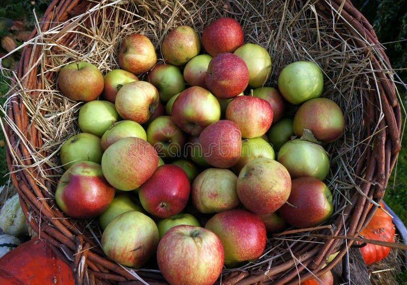 Κόκκινων και πράσινων μήλα διακοσμήσεων φθινοπώρου, σε ένα ψάθινο καλάθι στο άχυρο στοκ φωτογραφίες