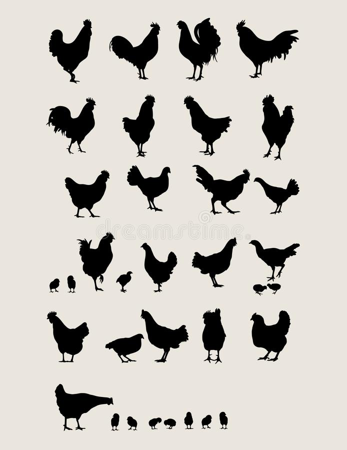 Κόκκορες και κοτόπουλο ελεύθερη απεικόνιση δικαιώματος