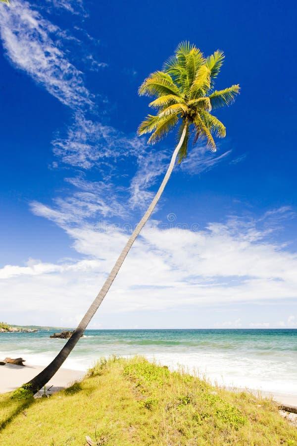 Κόλπος Cumana, Τρινιδάδ στοκ φωτογραφίες με δικαίωμα ελεύθερης χρήσης