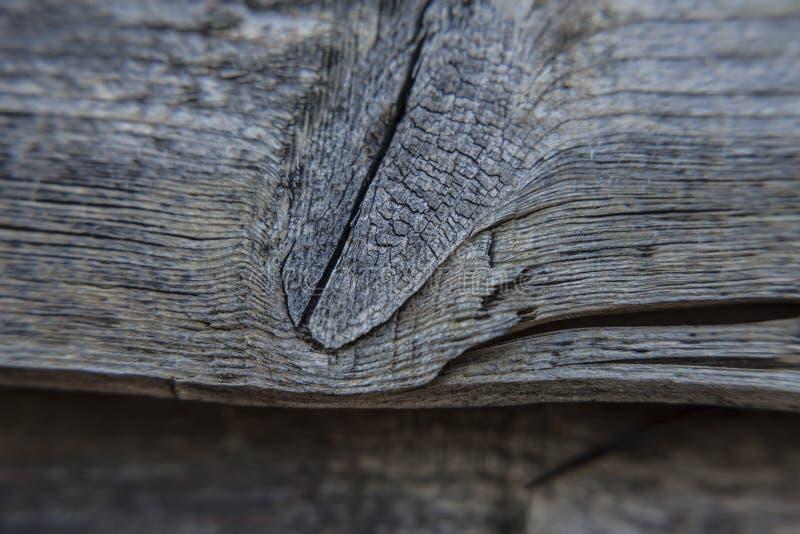 Κόμβος στο ξεπερασμένο ξύλο στοκ φωτογραφία με δικαίωμα ελεύθερης χρήσης