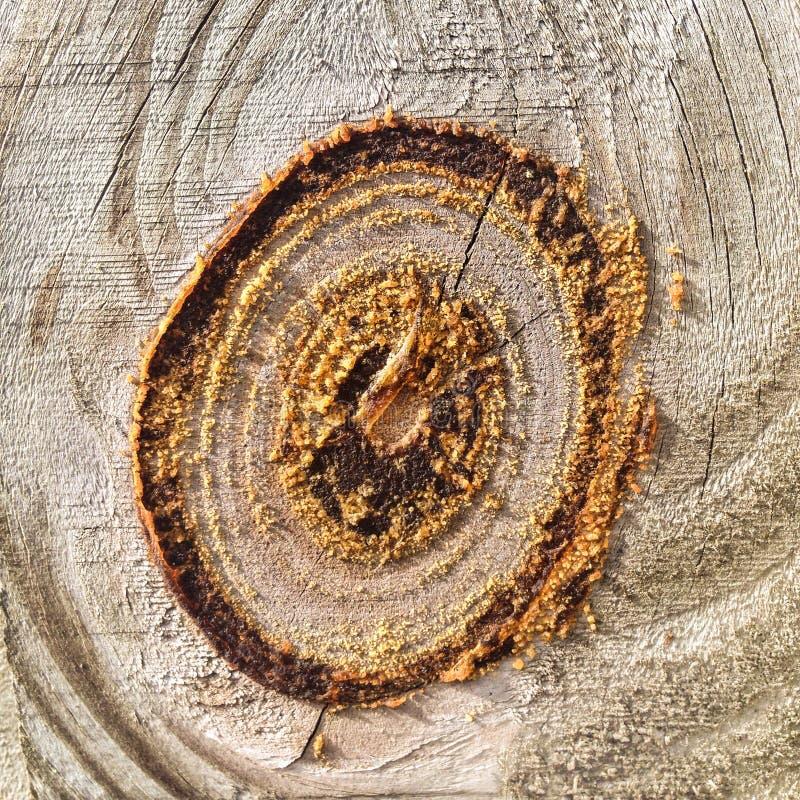 Κόμβος στο ξύλο σε έναν φράκτη στοκ φωτογραφία