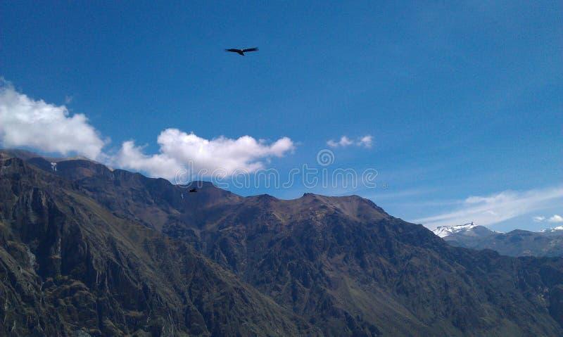 Κόνδορας που πετά επάνω από τα βουνά στοκ φωτογραφία με δικαίωμα ελεύθερης χρήσης