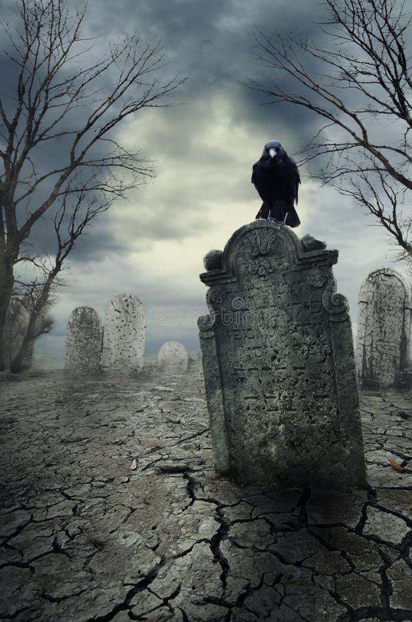 Κόρακας στην ταφόπετρα στοκ φωτογραφία