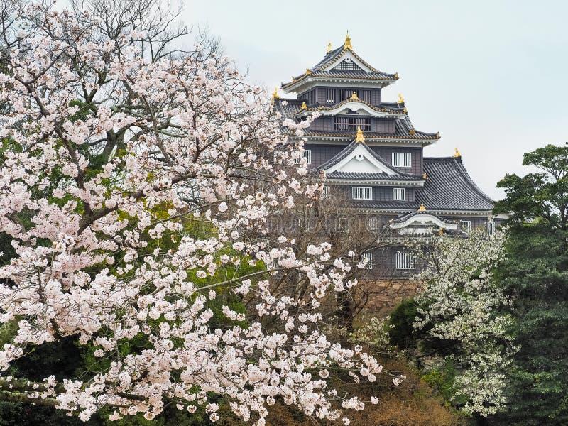 Κόρακας του Οκαγιάμα Castle που πετιέται κατά τη διάρκεια της εποχής άνθισης Sakura στοκ εικόνα