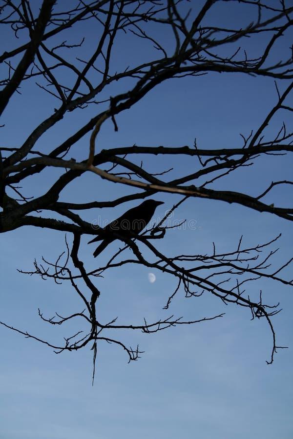Download κόρακας στοκ εικόνα. εικόνα από βράδυ, δέντρο, καθαρότητα - 394277