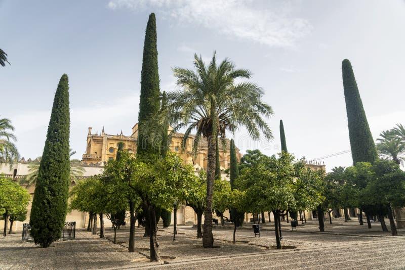 Κόρδοβα Ανδαλουσία, Ισπανία: προαύλιο καθεδρικών ναών στοκ εικόνα με δικαίωμα ελεύθερης χρήσης