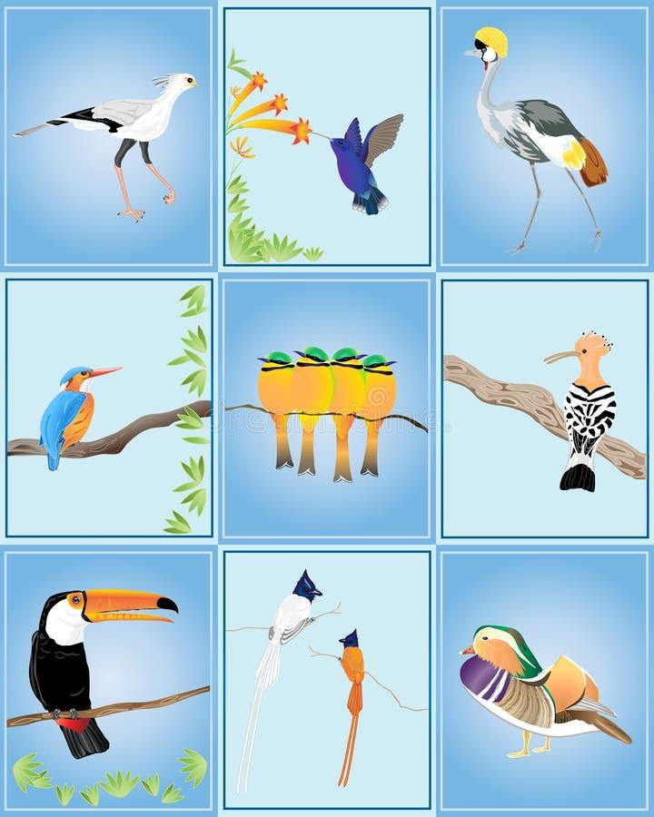 κόσμος πουλιών απεικόνιση αποθεμάτων