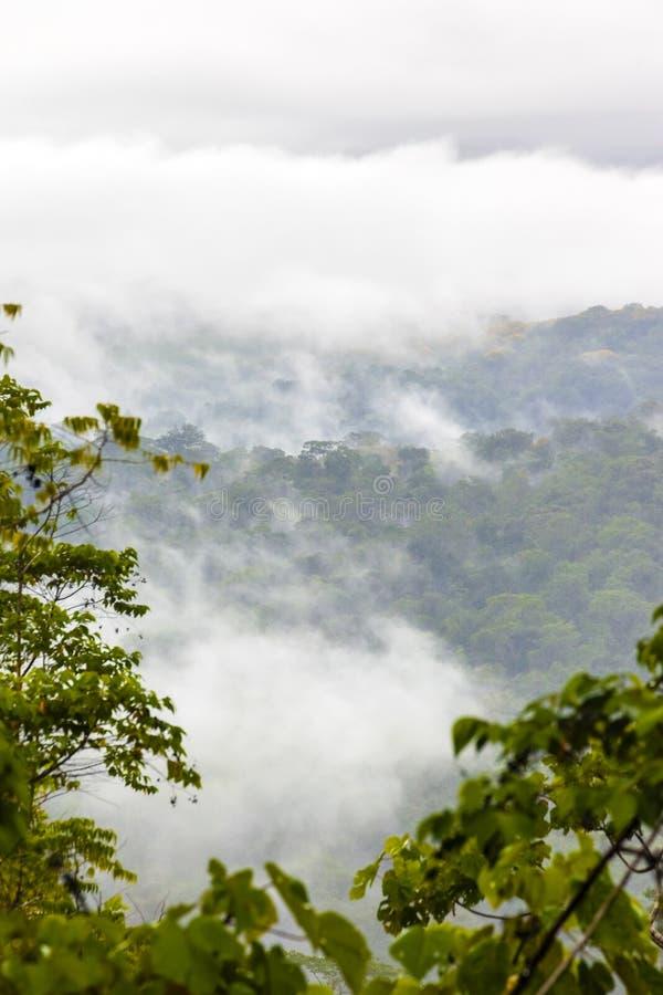 Κόστα Ρίκα - χερσόνησος Osa στοκ φωτογραφίες