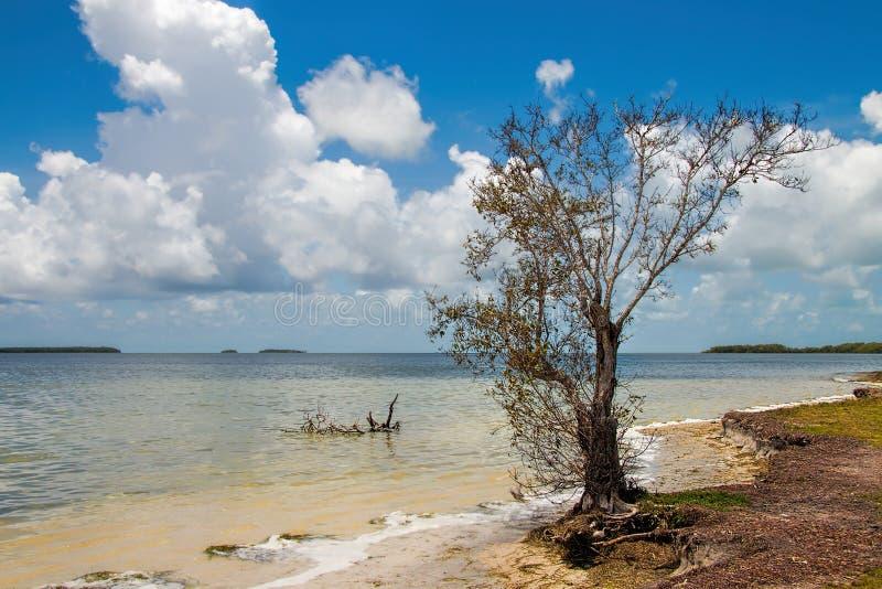 Κόλπος της Φλώριδας στοκ φωτογραφία με δικαίωμα ελεύθερης χρήσης