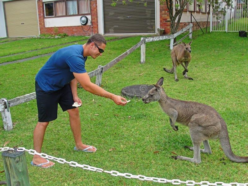 Κόλπος NSW Jervis καγκουρό - Αυστραλία στοκ φωτογραφίες με δικαίωμα ελεύθερης χρήσης