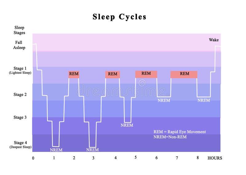 Κύκλοι του ύπνου ελεύθερη απεικόνιση δικαιώματος