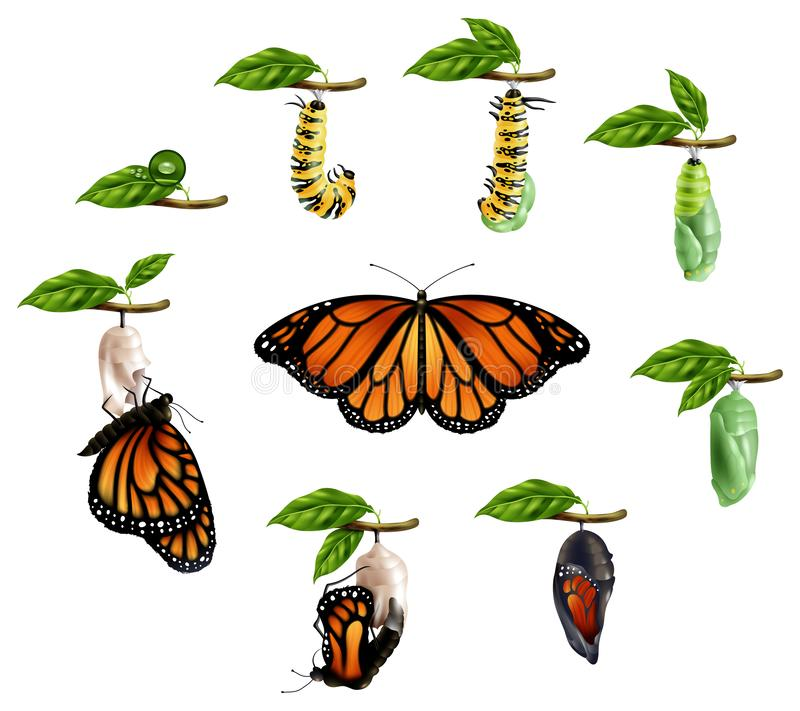 Κύκλος ζωής του ρεαλιστικού συνόλου πεταλούδων απεικόνιση αποθεμάτων