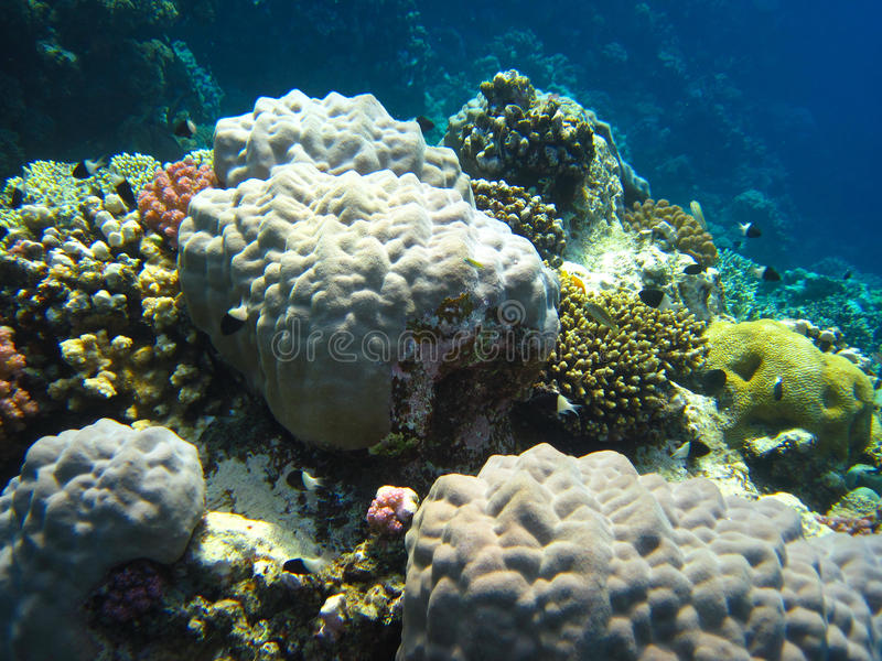 κύκλος κοραλλιών στοκ εικόνες