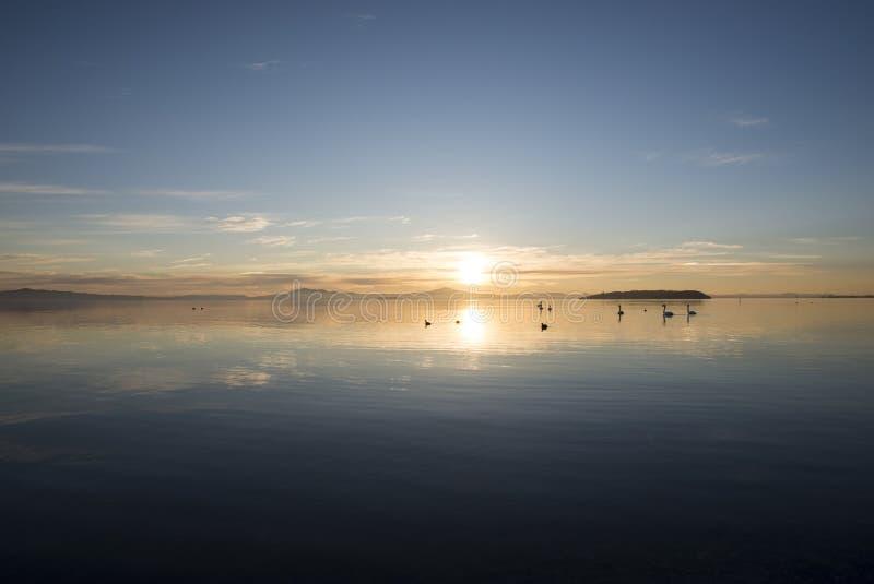 Κύκνοι στον όμορφο ουρανό ηλιοβασιλέματος στοκ φωτογραφία με δικαίωμα ελεύθερης χρήσης