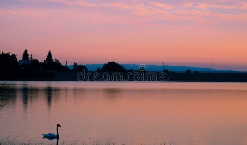 Κύκνος στη λίμνη στοκ εικόνα