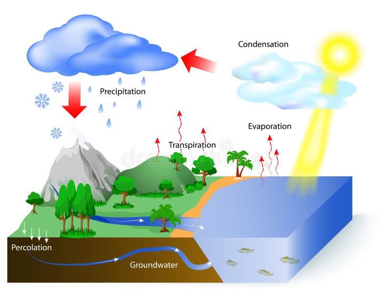 Κύκλος ύδατος διανυσματική απεικόνιση