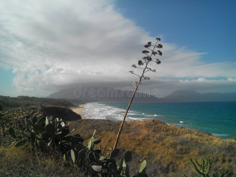 Κύματα στο Κόλπο Castellammare και στις χαρακτηριστικές σισιλιάνες εγκαταστάσεις πρώτου πλάνου στοκ εικόνες