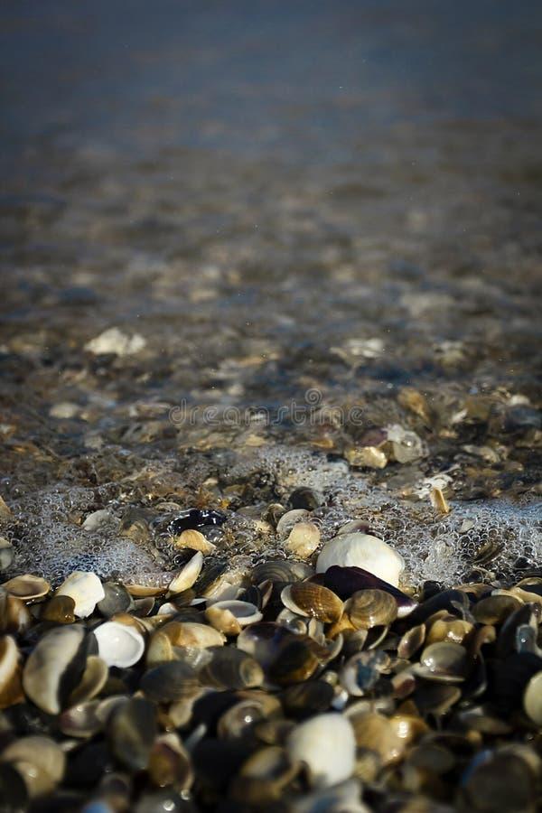 Κύμα θάλασσας στην ακτή στοκ εικόνες
