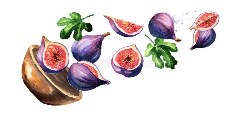 Κύπελλο με τα figfruits Συρμένη χέρι οριζόντια απεικόνιση watercolor στοκ εικόνες με δικαίωμα ελεύθερης χρήσης