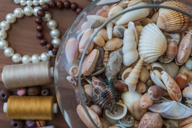 Κύπελλο των θαλασσινών κοχυλιών με τα μαργαριτάρια στοκ εικόνες με δικαίωμα ελεύθερης χρήσης
