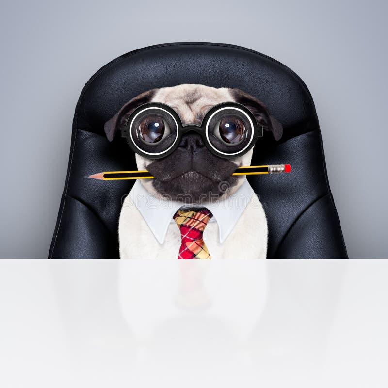 Κύριο σκυλί εργαζομένων γραφείων στοκ φωτογραφία με δικαίωμα ελεύθερης χρήσης