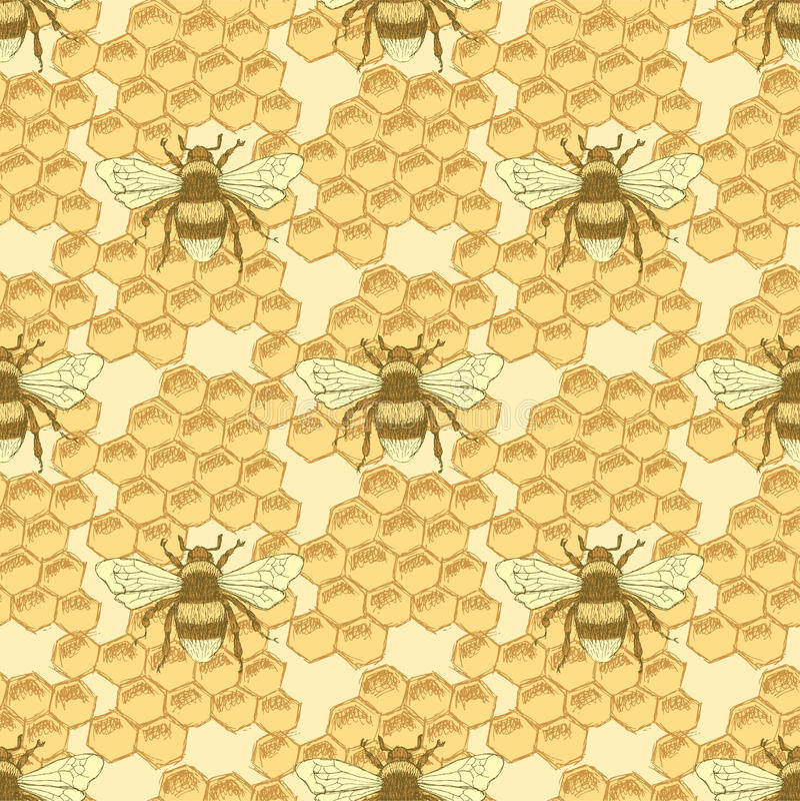 Κύτταρα μελισσών και μελιού σκίτσων στο εκλεκτής ποιότητας ύφος διανυσματική απεικόνιση