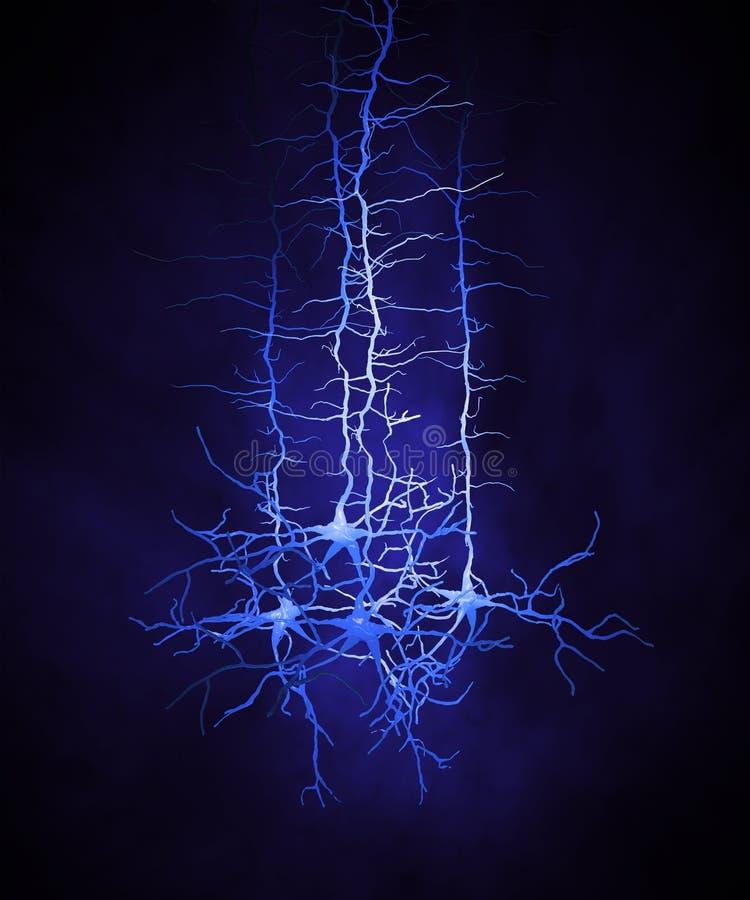 Κύτταρα νευρώνων διανυσματική απεικόνιση
