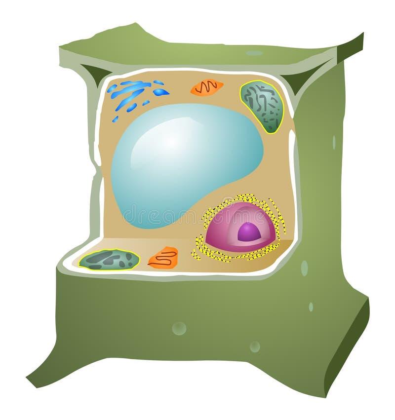 Κύτταρο φυτού ελεύθερη απεικόνιση δικαιώματος