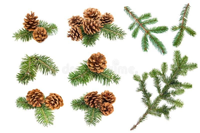 Κώνοι και κλάδοι πεύκων Χριστουγέννων στοκ εικόνα