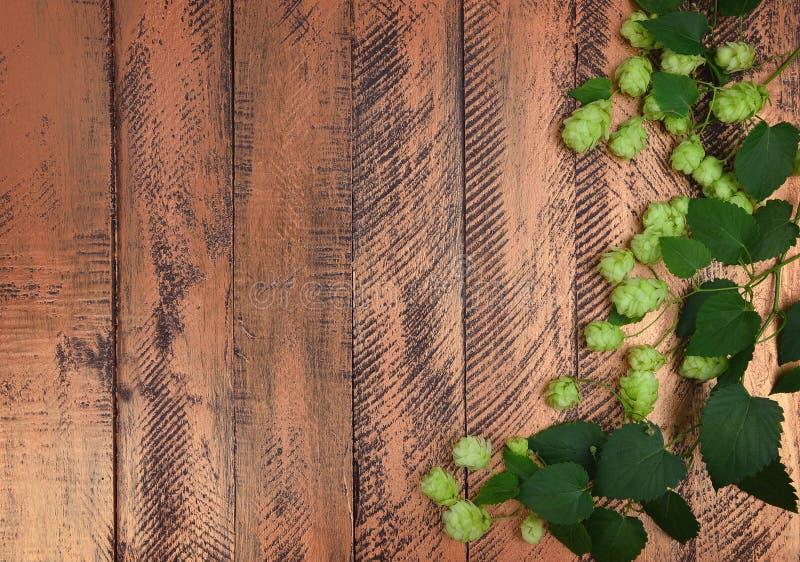 Κώνοι λυκίσκου και πράσινα φύλλα Τοπ όψη στοκ εικόνες