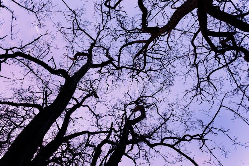 Κλάδοι δέντρων σκιαγραφιών με τον ουρανό Ηλιοβασίλεμα Υπόβαθρο για το desig στοκ εικόνες