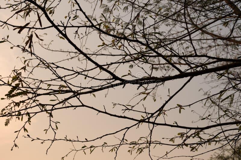 Κλάδοι δέντρων σκιαγραφιών στοκ φωτογραφία με δικαίωμα ελεύθερης χρήσης
