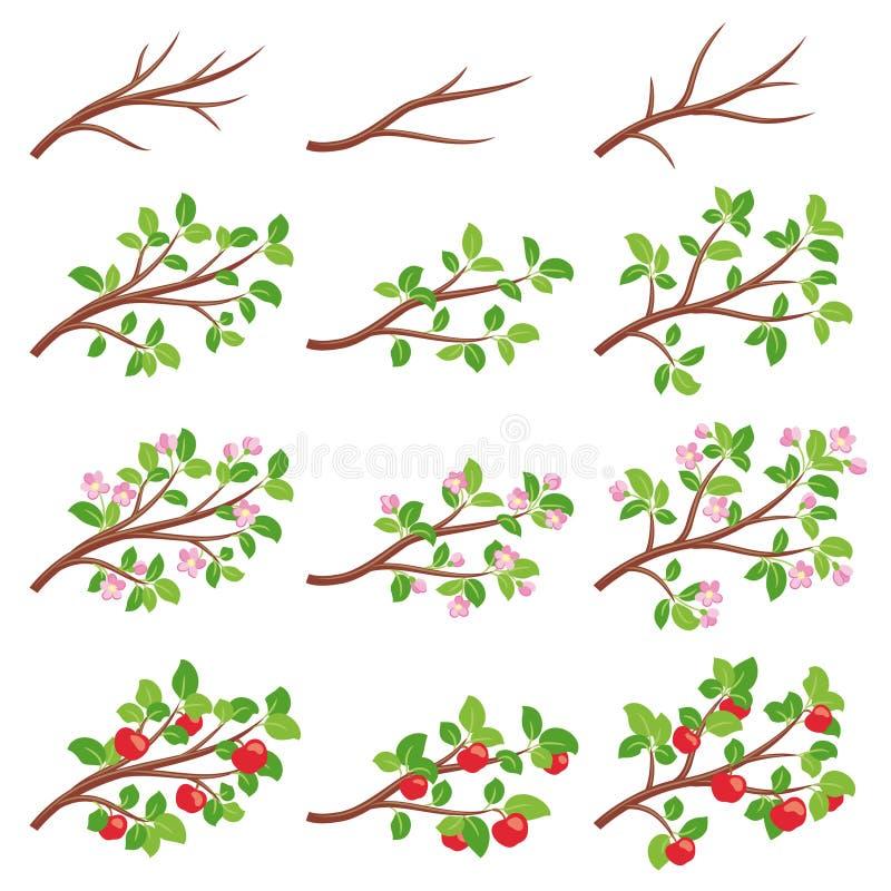 Κλάδοι δέντρων της Apple απεικόνιση αποθεμάτων