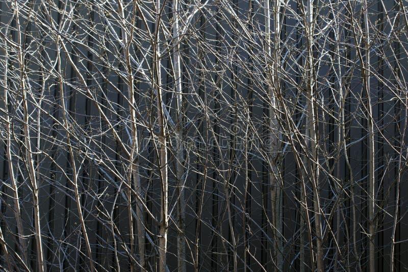 Κλάδοι δέντρων στοκ εικόνα
