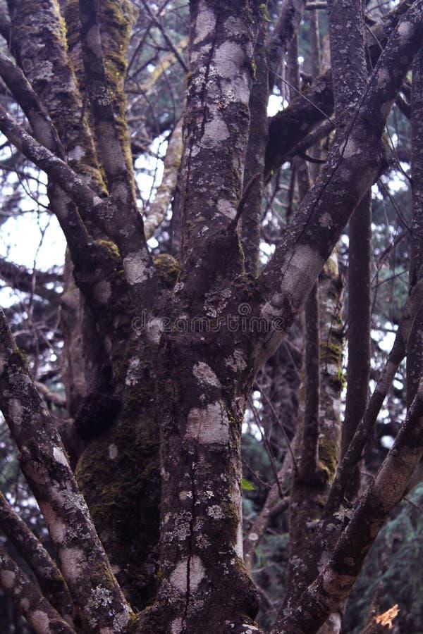 Κλάδοι δέντρων Hill στοκ εικόνα με δικαίωμα ελεύθερης χρήσης