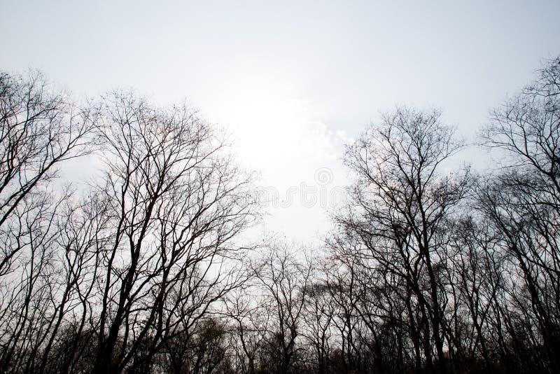 Κλάδοι ενός δέντρου χωρίς φύλλα στο δάσος ξηρασίας στοκ εικόνες