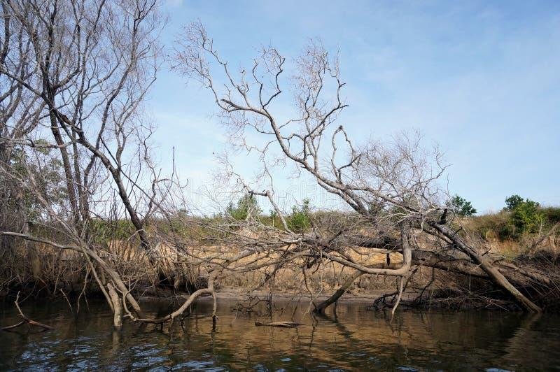 Κλάδοι και δέντρα στοκ φωτογραφίες