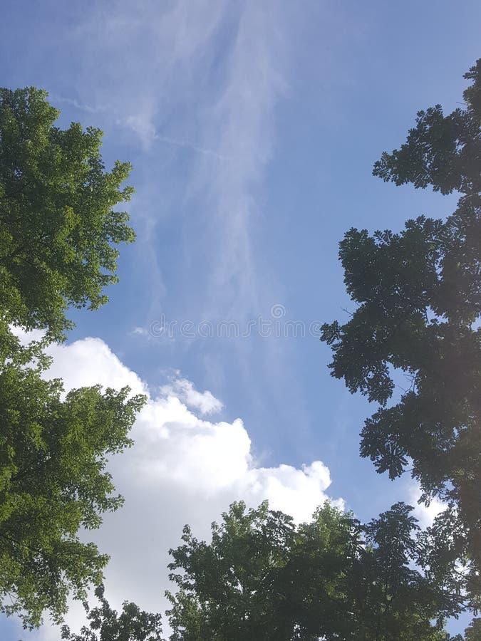 κλάδοι πράσινοι κανένας riverbank καλοκαίρι ουρανού στοκ εικόνες