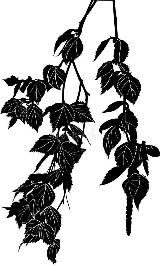 Κλάδος δέντρων σημύδων διανυσματική απεικόνιση